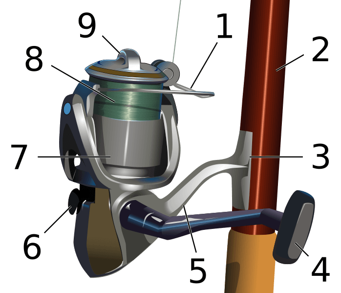 anatomy of spinning reel