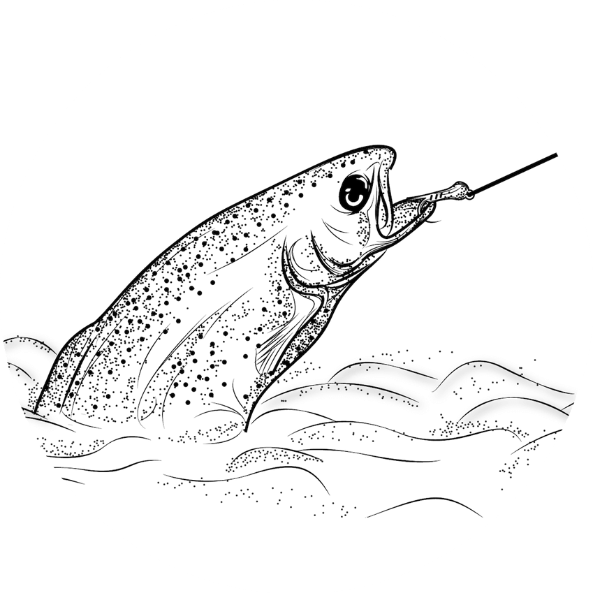 Fly-fishing-trout-sketch