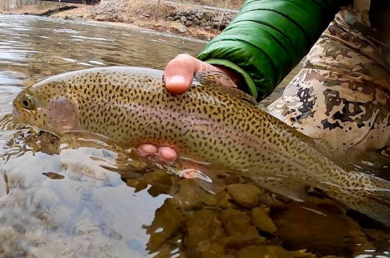 trout-caught-on-3wty-fly-rod